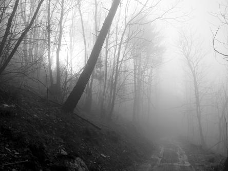 A misty forest road. Photo by Mirko Delcaldo.